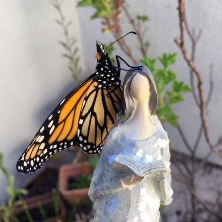 Monarch Butterfly and an angel reading a book
